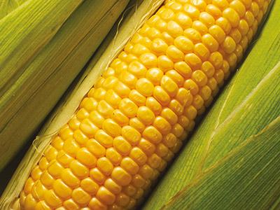 Полив кукуруза
