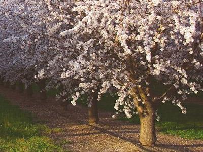 Полив фруктовых деревье